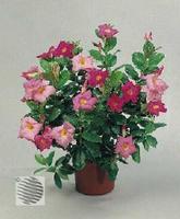 Фотографии комнатных, садовых и плодовых и ягодных растений.  Фото садовые и комнатные цветы.